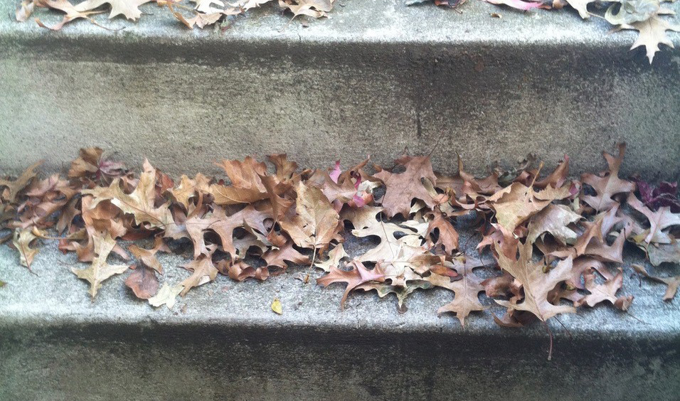 fallen leaves on a step