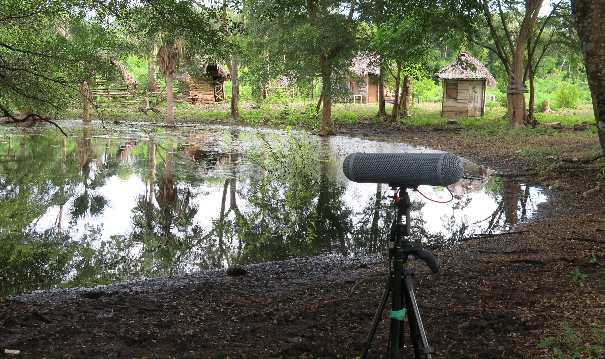 Recording sunrise animal chatter in the Ciénega Zapata,