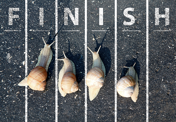 Snail run near the Finish line on road